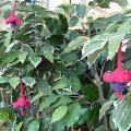 Garden in Blooming Marvellous